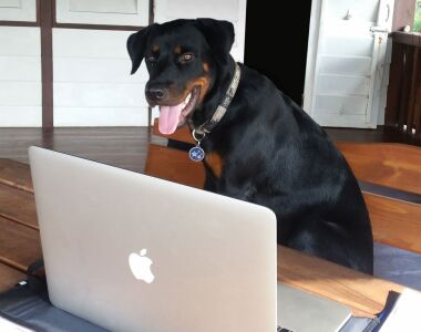 A dog sits in front of a laptop