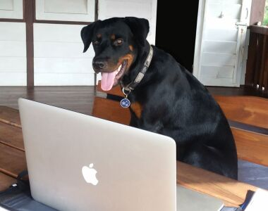 A dog looks at a laptop