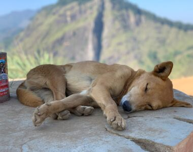 Are shelters the answer to the street dog overpopulation crisis?