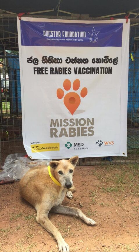 dog waiting for rabies vaccination mission rabies sri lanka 2018