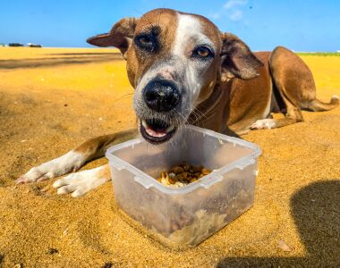 A dog on the beach eats a meal