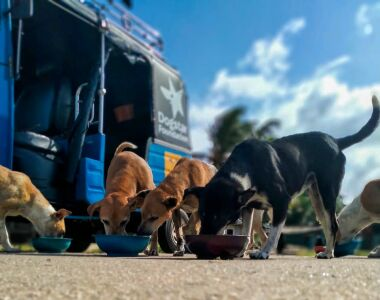 Street dogs eat Bowls of food