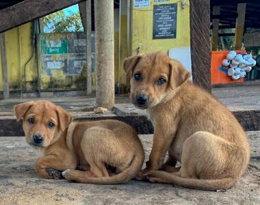 2 homeless puppies on the roadside